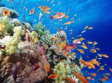 antias-sobre-el-arrecife